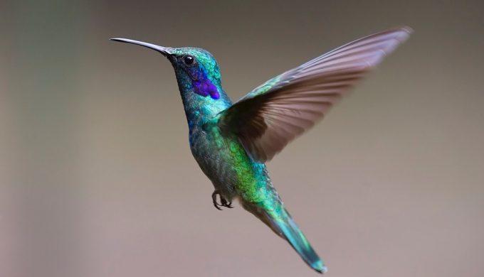 hummingbird-2139279_960_720